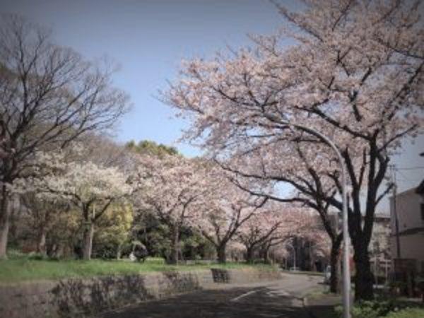 花咲く季節